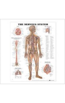 The Nervous System Chart